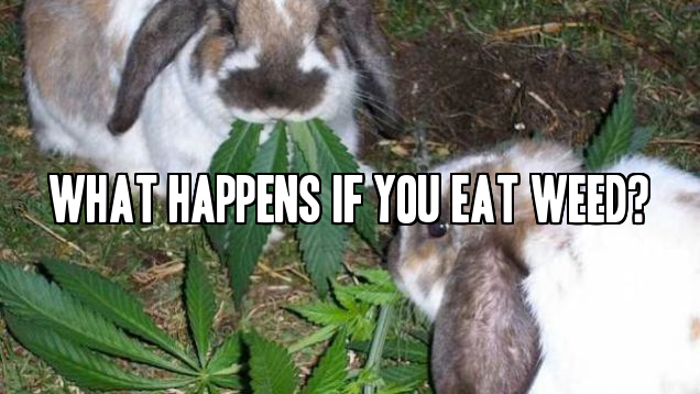 What Happens If You Eat Weed?