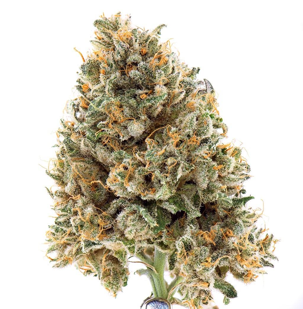 marijuana bud with white strains
