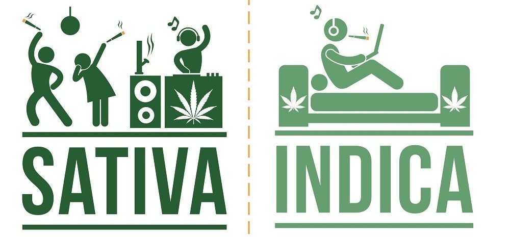 Choosing your plant - sativa or indica