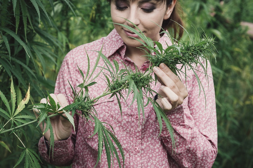 Women smelling and tasting marijuana plant