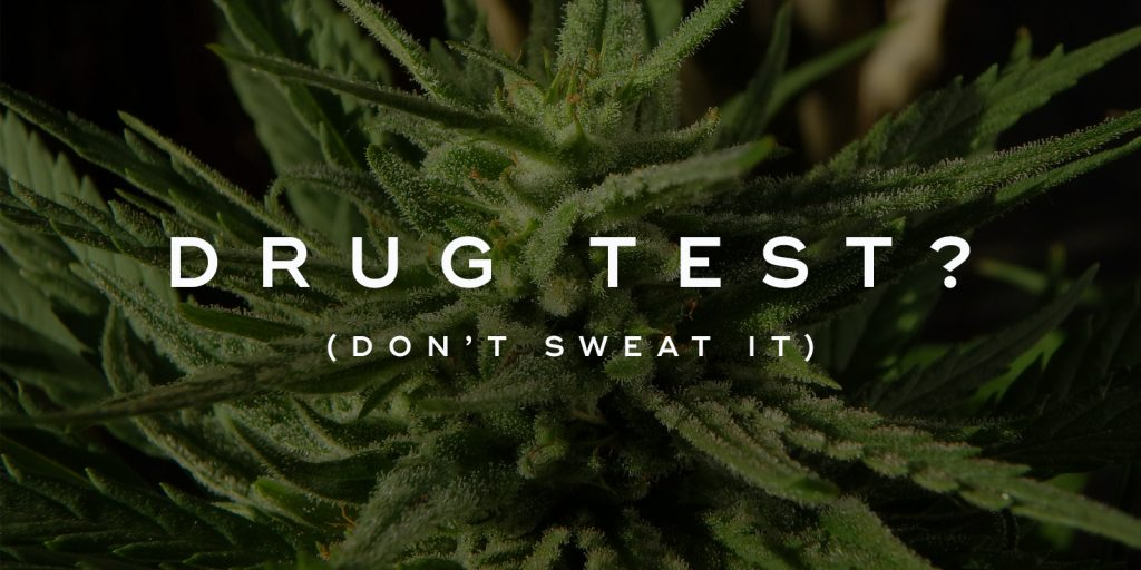 Need To Pass a Drug Test in 24 Hours? Stay Calm and Continue Reading...
